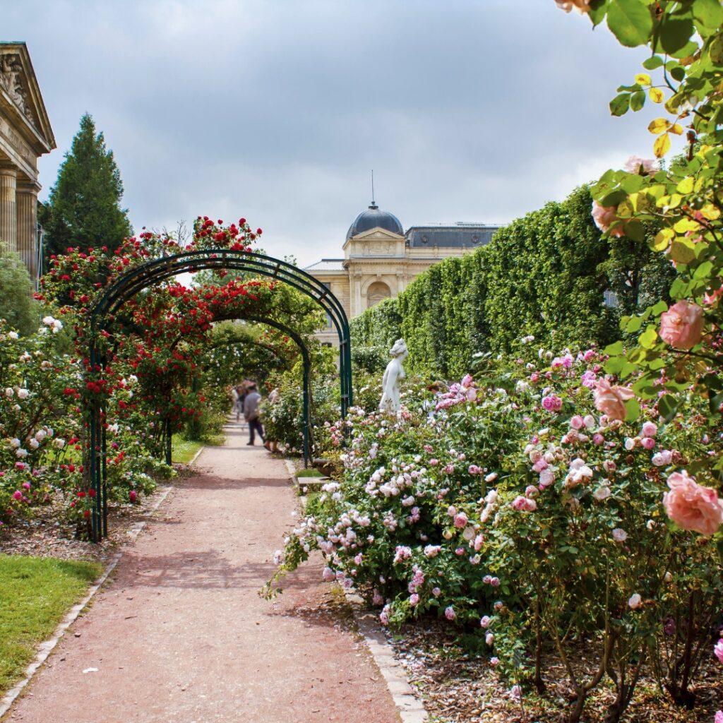 Jardin des Plantes Allée des Roses