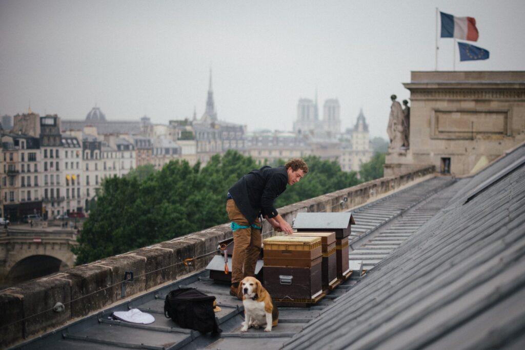 Paris beehives