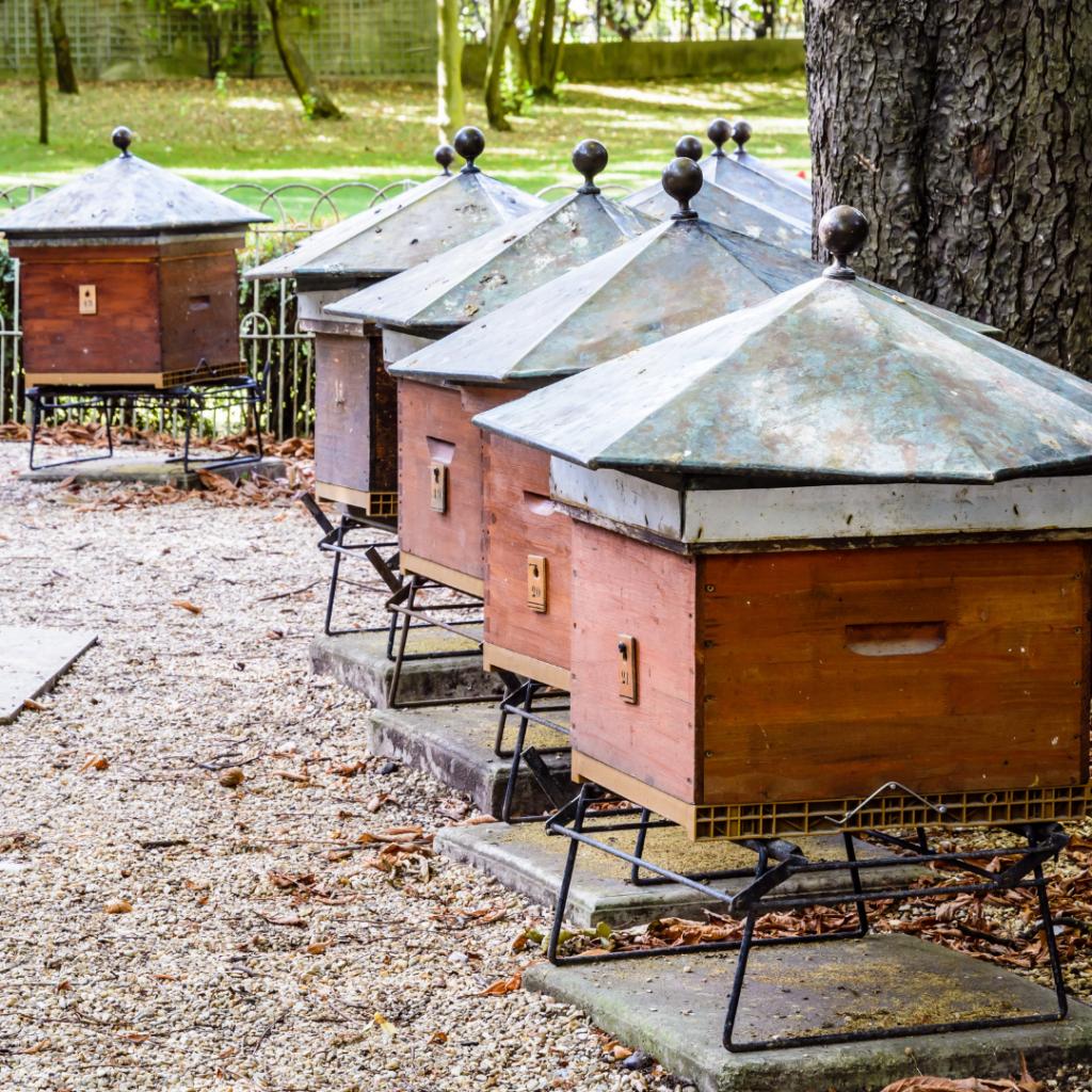 Jardin du Luxembourg beehives